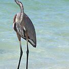 Heron at Stump Pass (Florida, USA) by Kim McClain Gregal