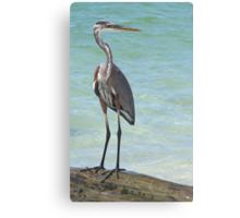 Heron at Stump Pass (Florida, USA) Canvas Print