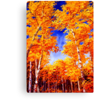 Sky View From the Aspen Forest Canvas Print