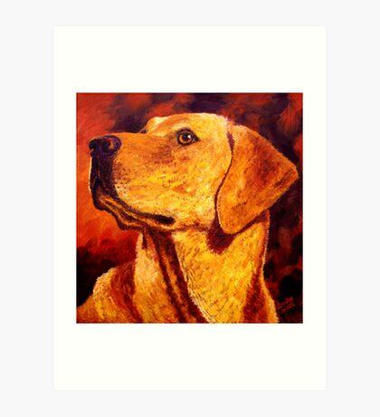 Labrador Dignity Art Print