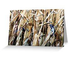 Blue Jays In the Corn Field Greeting Card
