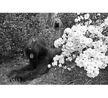 Teddy & Dolly #1 Photographic Print