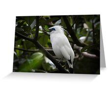 Indonesia 8 - Balinese Starling, Leucopsar rothschildi, Greeting Card