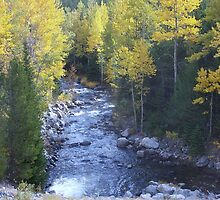BEAR CREEK,  Montana by pocopeppygator