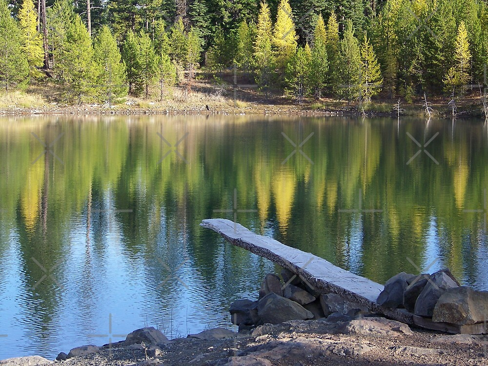 Fall Reflection   by Betty  Town Duncan