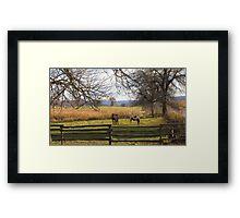 Horses Grazing Framed Print
