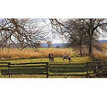 Horses Grazing Photographic Print