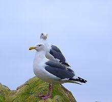 Jonathon Seagull & Company by pocopeppygator