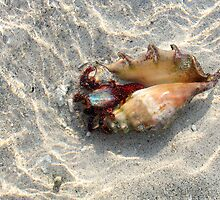 Indonesia 10 - Hermit crab by Normf