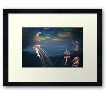 The Berlin Zoo - Jelly Fish Framed Print