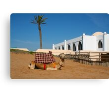 Camel in Morocco Canvas Print