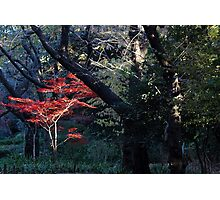 Ueno Park, Japan - Red Amongst the Green Photographic Print