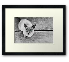 Coolio with blue eyes Framed Print