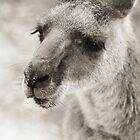 Wilderness Australia - Wildlife of the Southern Land by Christopher Cole