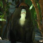 De Brazza's Guenon by Debbie Thatcher