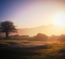 Sunrise on Dartmoor, Devon by Dave Sayer