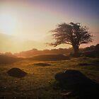 Tree in the sunrise on Dartmoor, Devon by Dave Sayer
