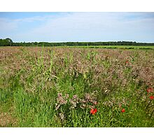 Field of Beauty Photographic Print