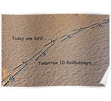 Today one bird; tomorrow 10 RedBubblers..... Poster