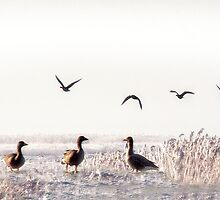 Geese fairy tale by PhotomasWorld