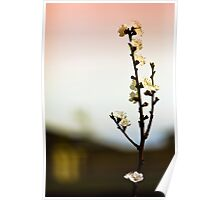 Spring Blossoms  Poster