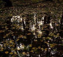 Dead water by LukeMajewski