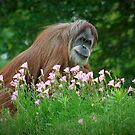 Orangutan In Flowers by Jim Felder