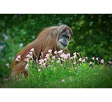 Orangutan In Flowers Photographic Print