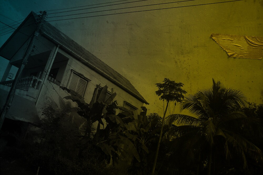 house palms cables by Danny Edwards