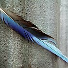 Blue Feather and Fence by Victoria McGuire