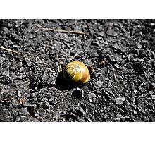 Lone Snail - Montezuma, NY Photographic Print