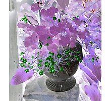 Purple Shamrock Photographic Print