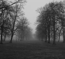 Foggy Morning Walk by davesphotographics