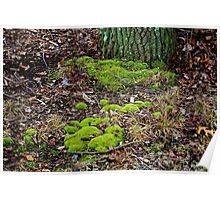 Moss in the Woods Poster