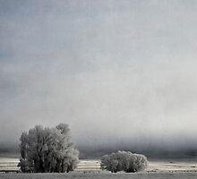 Two Trees in Frost by Jill Ferry
