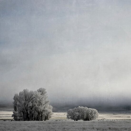 Two Trees in Frost by Jill Ferry