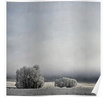 Two Trees in Frost Poster