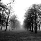 Foggy Morning Walk 3 by davesphotographics