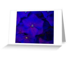 Blue ortensia Greeting Card