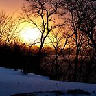 Winter Sun by Veronica Schultz