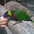 Lorikeet by Walt Conklin