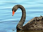 Black Swan by Marion  Cullen