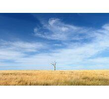 A Lone Tree Photographic Print