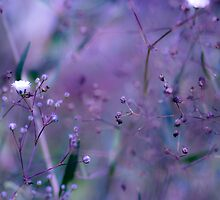1/2 a can of purple :) by HelenaBrophy