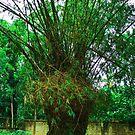 Big wonderful tree by JeremiahB