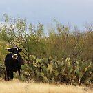 Desert Steer by Judi FitzPatrick