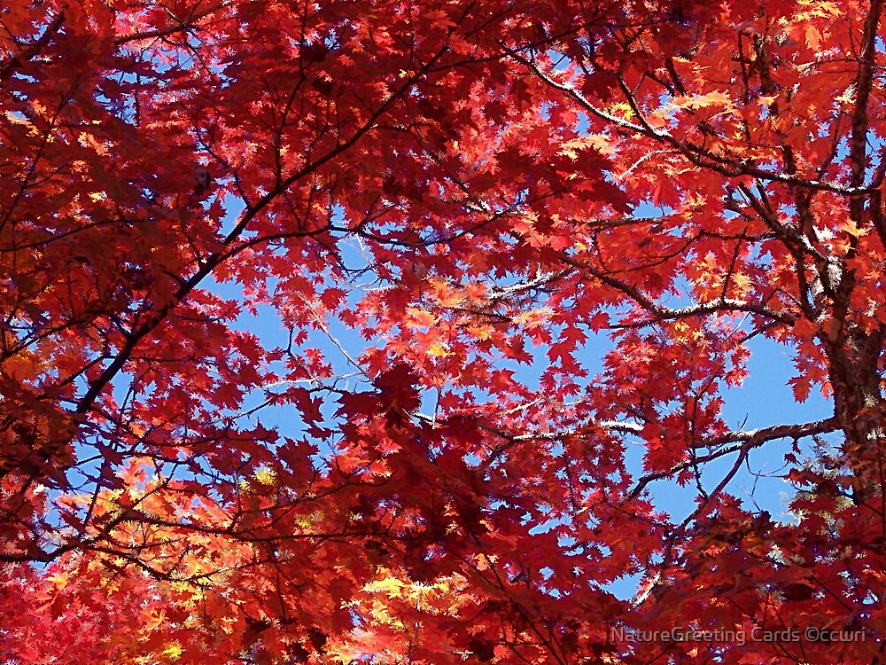 Autumn Beauty by NatureGreeting Cards ©ccwri