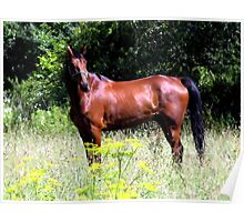 Country Horse Poster