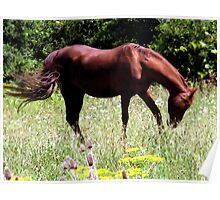 Country Horse 2 Poster
