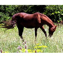 Country Horse 2 Photographic Print